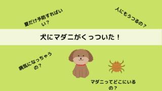 犬のマダニの症状と対処法