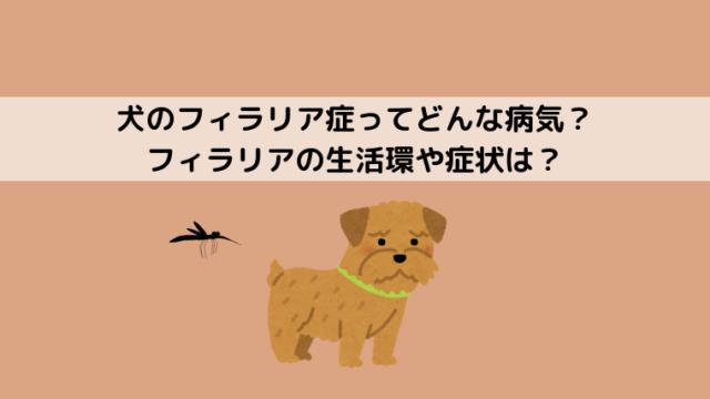 犬のフィラリア症の症状