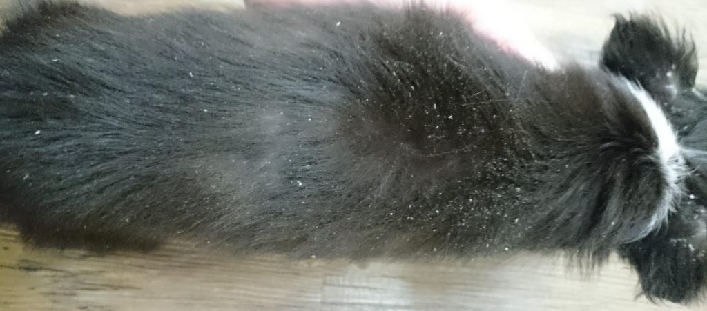 バリカンで刈ったら毛が生えてこなくなった犬