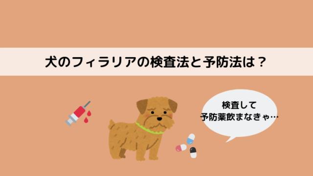 犬のフィラリアの検査と予防