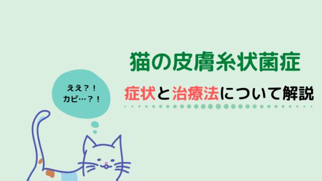 猫の糸状菌症の症状と治療法