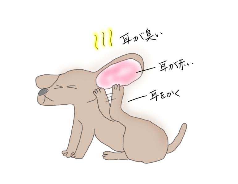 耳がかゆい犬