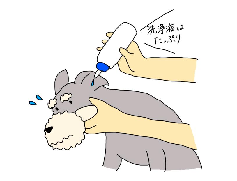 耳に洗浄液を入れる