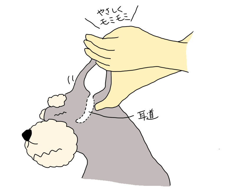 耳の根元をマッサージ