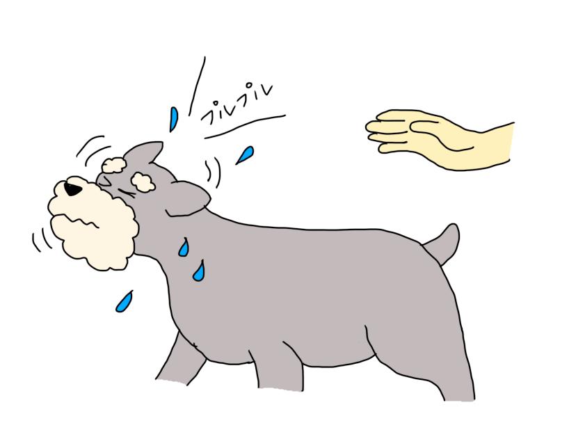 耳垢を自然排出する犬